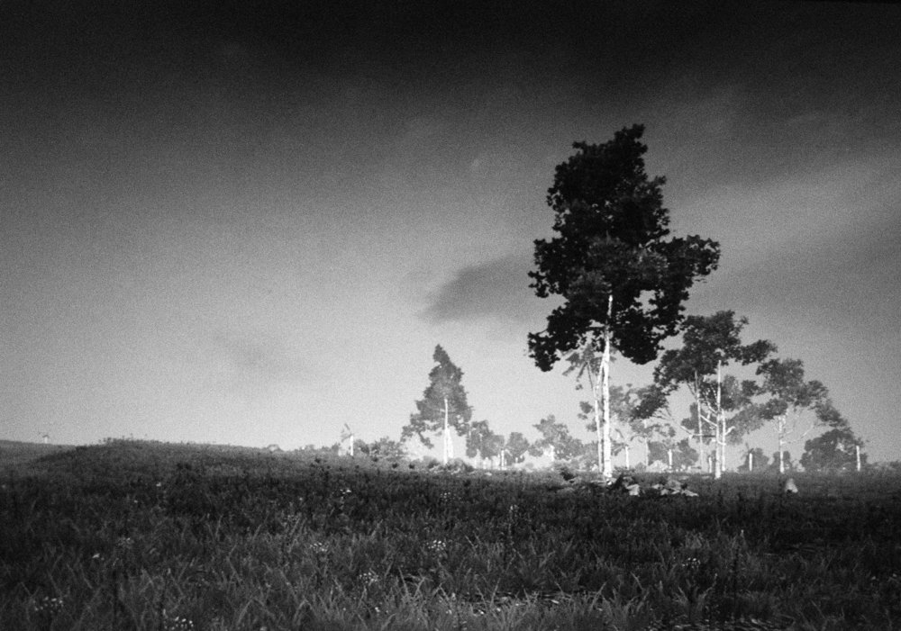 Landscape 1, with tall trees