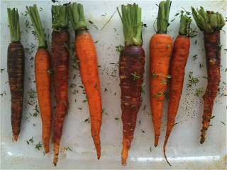 CarrotAndThyme.png