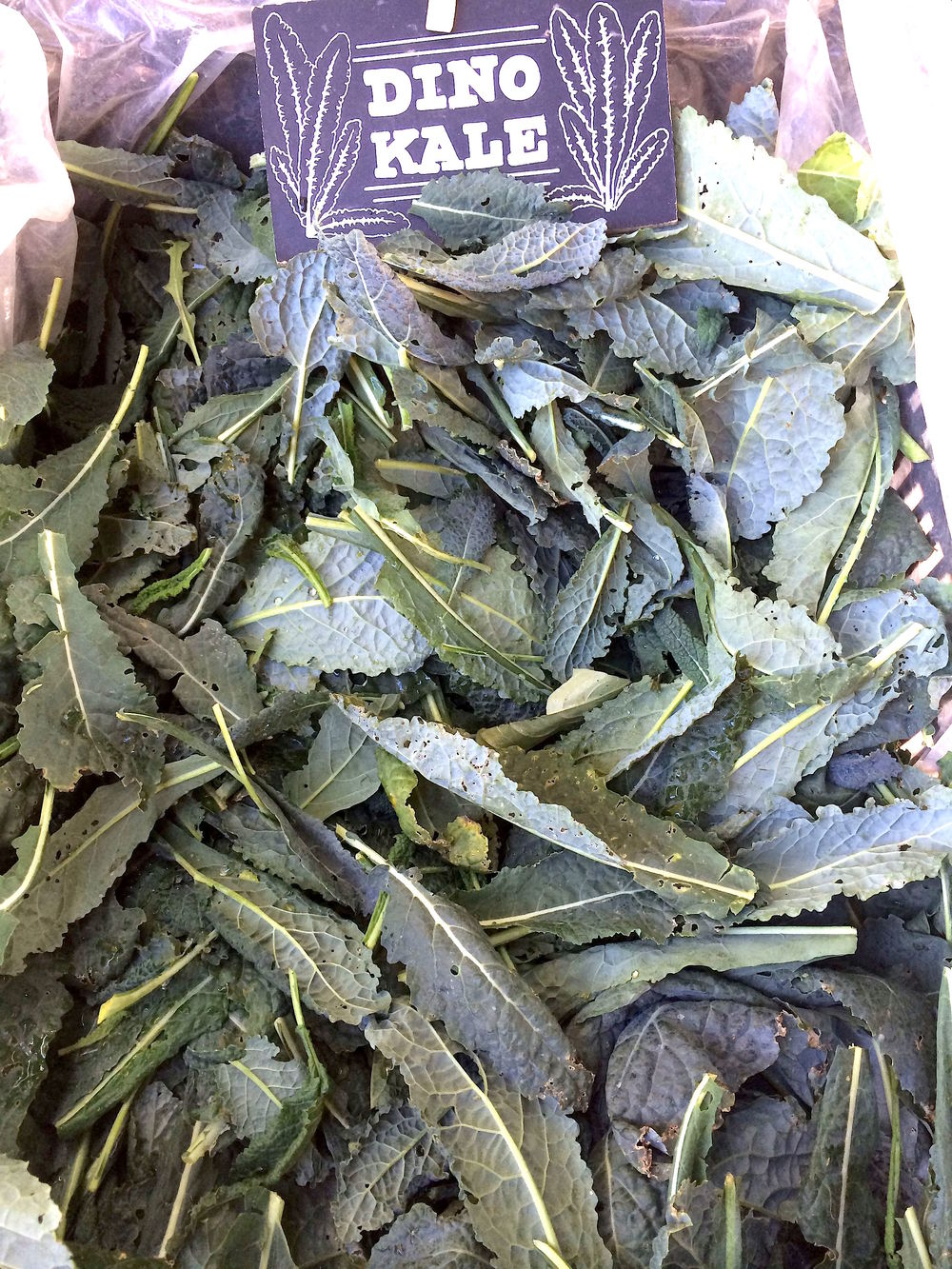 Dinosaur Kale From The  CUESA  Ferry Building Farmers Market (Marin Roots Farm)