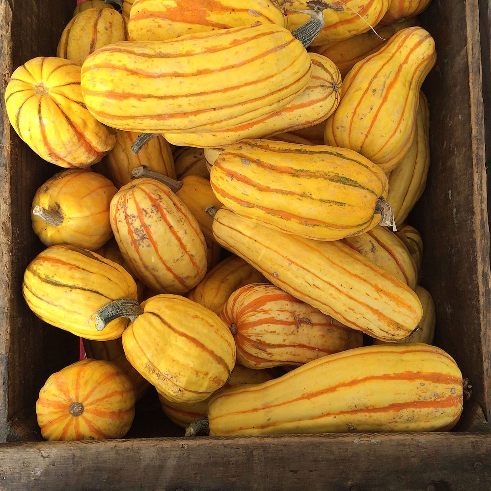 Delicata squashes from Two Shooting Stars CSA at Berkeley's Farmers Market