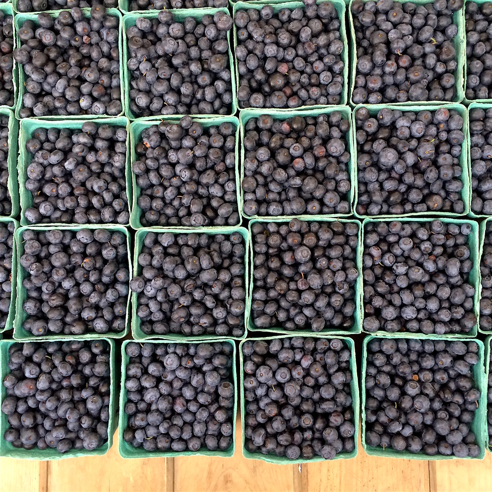 A mesmerizing sea of blueberries at the Union Square Greenmarket