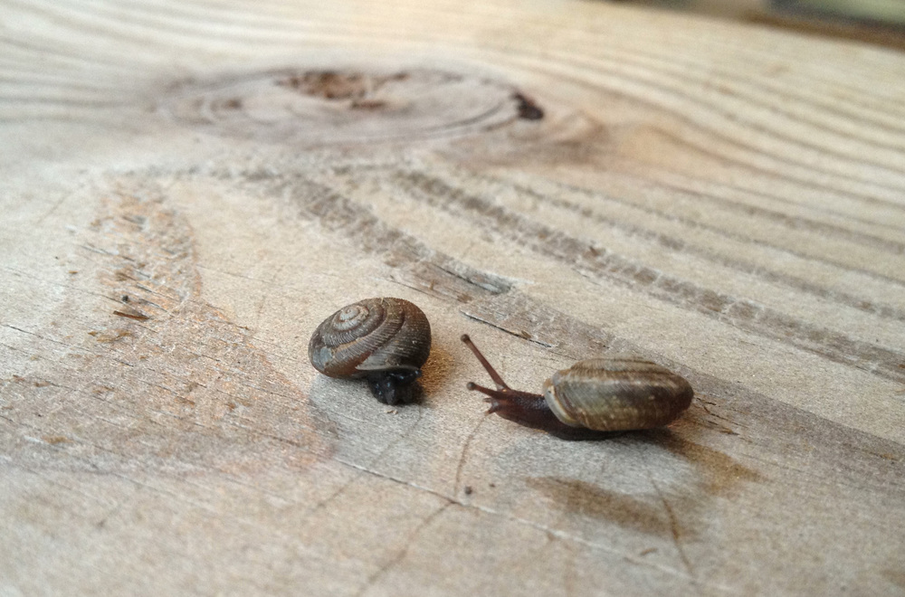 201310_Snails.jpg
