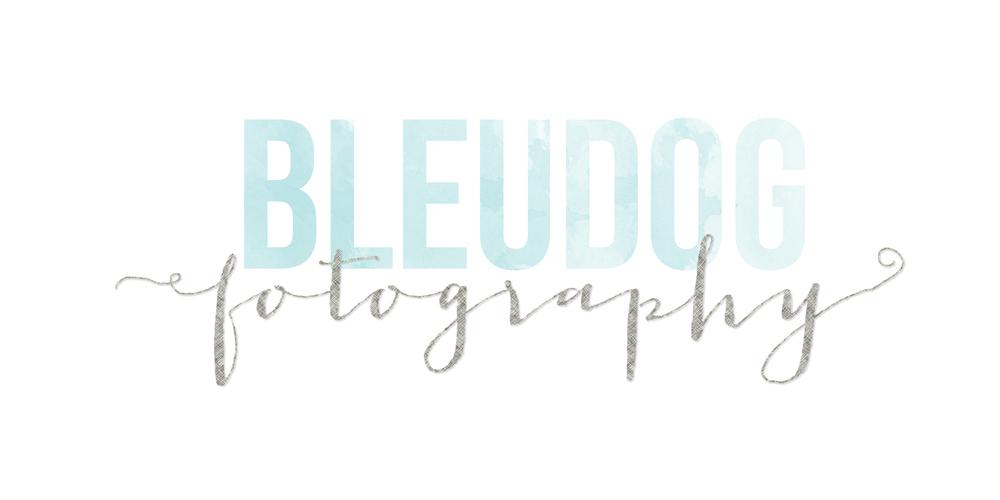 bleudog2.jpg