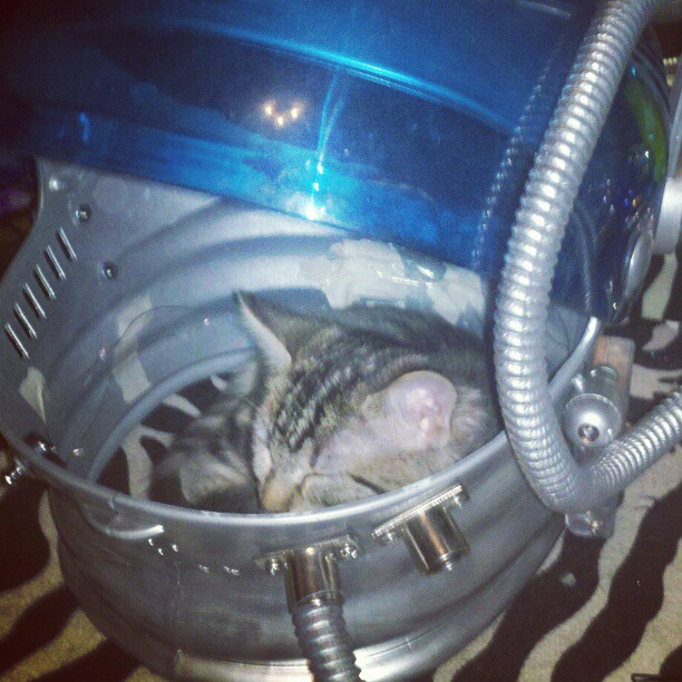 Liftoff #hellospaceman #kittens (Taken with Instagram)