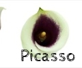 thumb_120x100_picasso_collage2.jpg