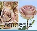 thumb_120x100_amnesia n13.jpg