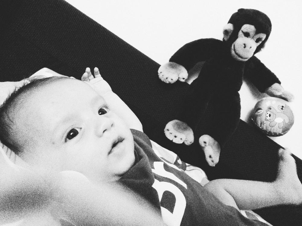 Lesson #1 : La scimmia ti frega sempre