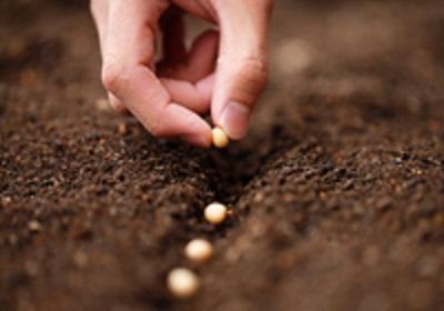 Planting Seeds2.jpg