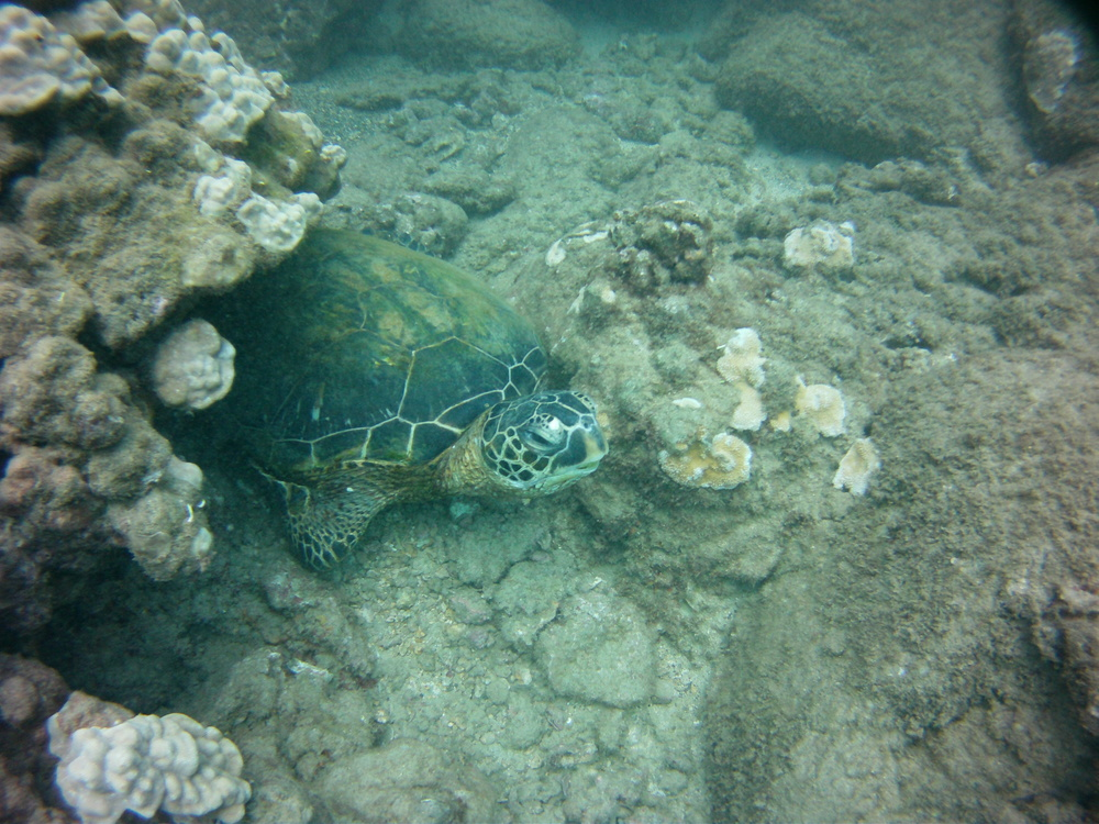 Turtles where all around us