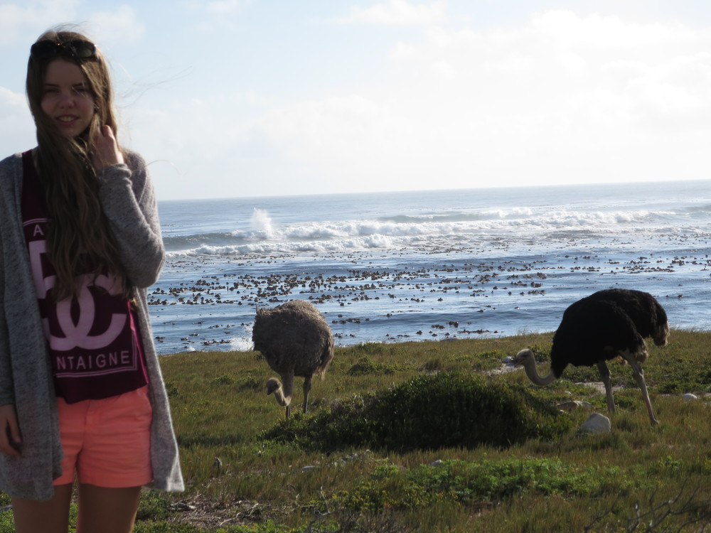 Dora very close to some Ostriches