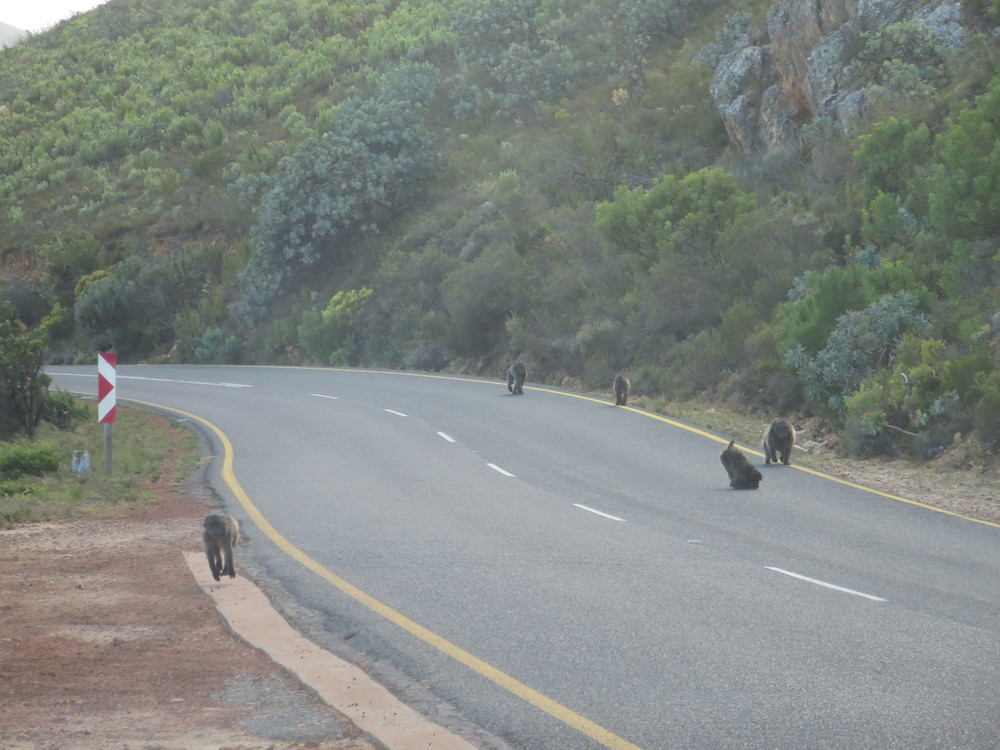But in one place there were not people on the road, but Baboons running around and playing in the middle of the road