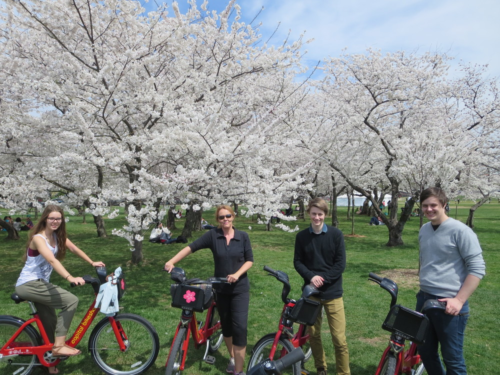 The kids hated this shot - did not see what bikes had to do with Cherry trees :-) I (Gudrun) love it!