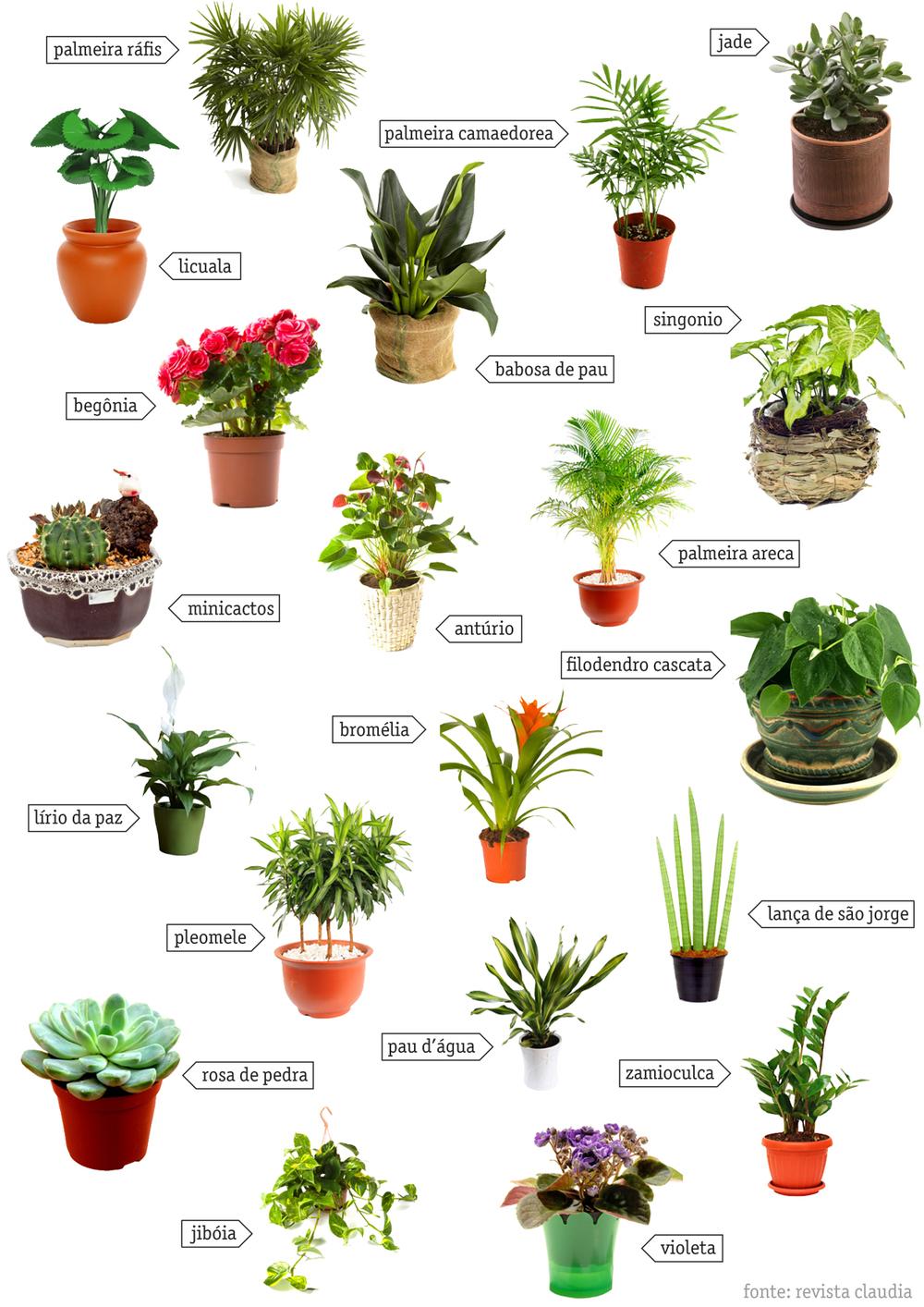 Blog dobra - Clases de plantas de interior ...