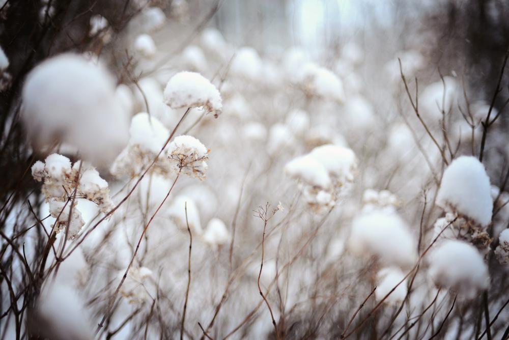 DSC_1914 snow flowers.jpg