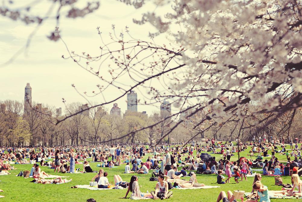 DSC_4967 central park picnic april 2015.jpg
