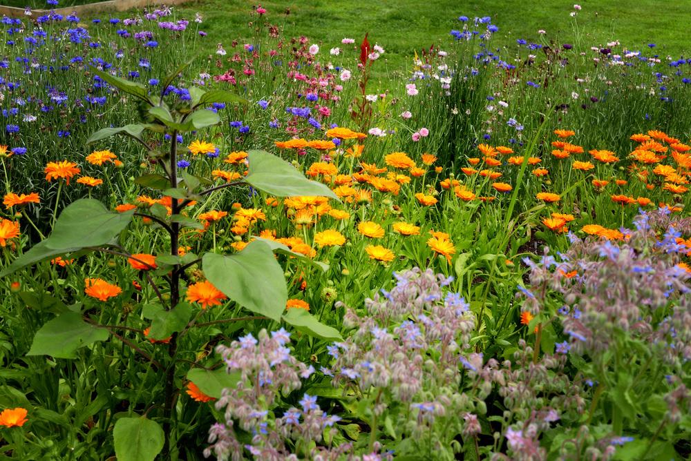 DSC_5945 eden flowers.jpg