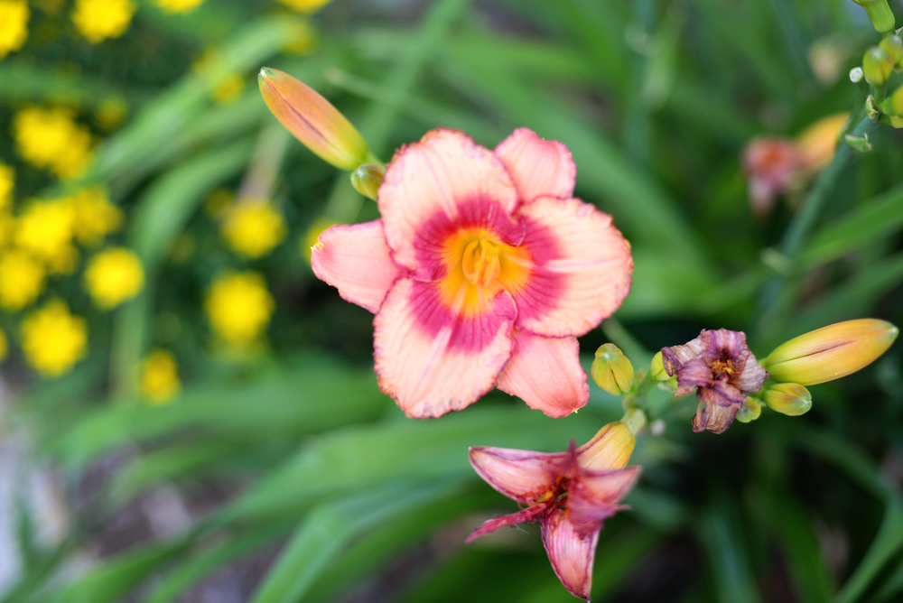 DSC_5543 flowers.jpg