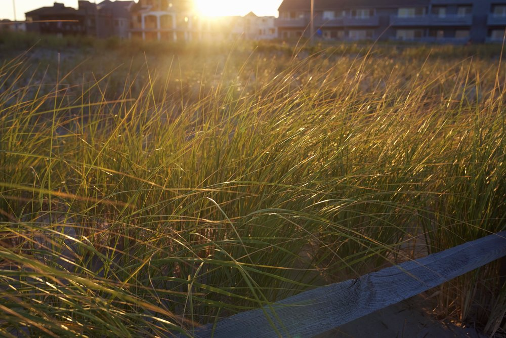 sea grass beach. web gallery.jpg