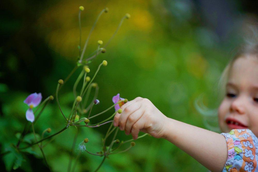 DSC_3918 adara pick flowers.jpg