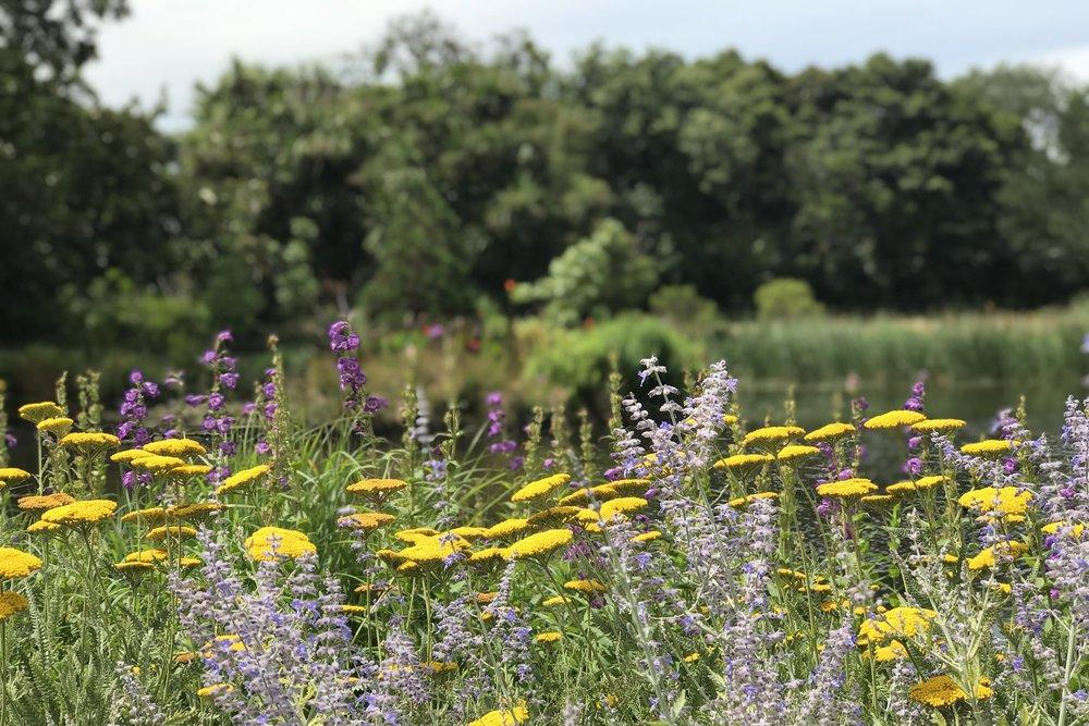 IMG_9834 botanical garden flowers.jpg