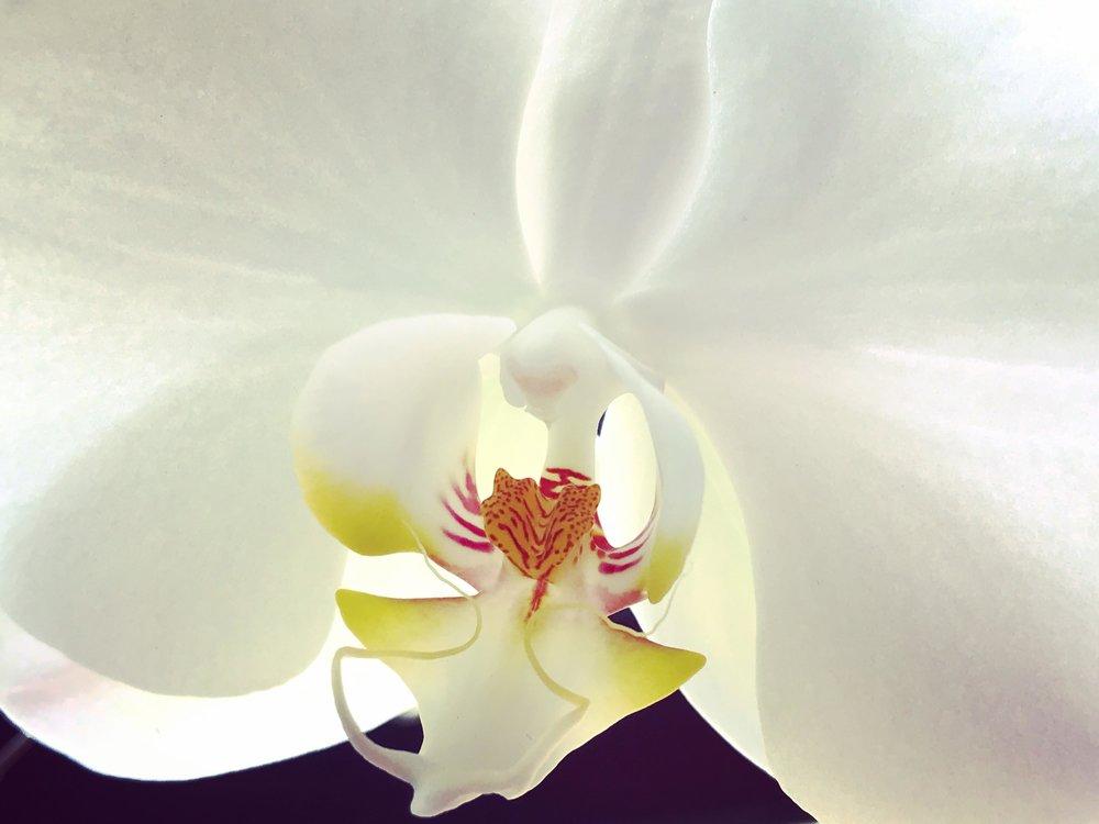 IMG_3554 2 orchid.jpg