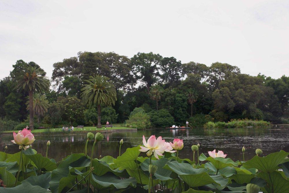DSC_2226 melbourne botanical garden.jpg