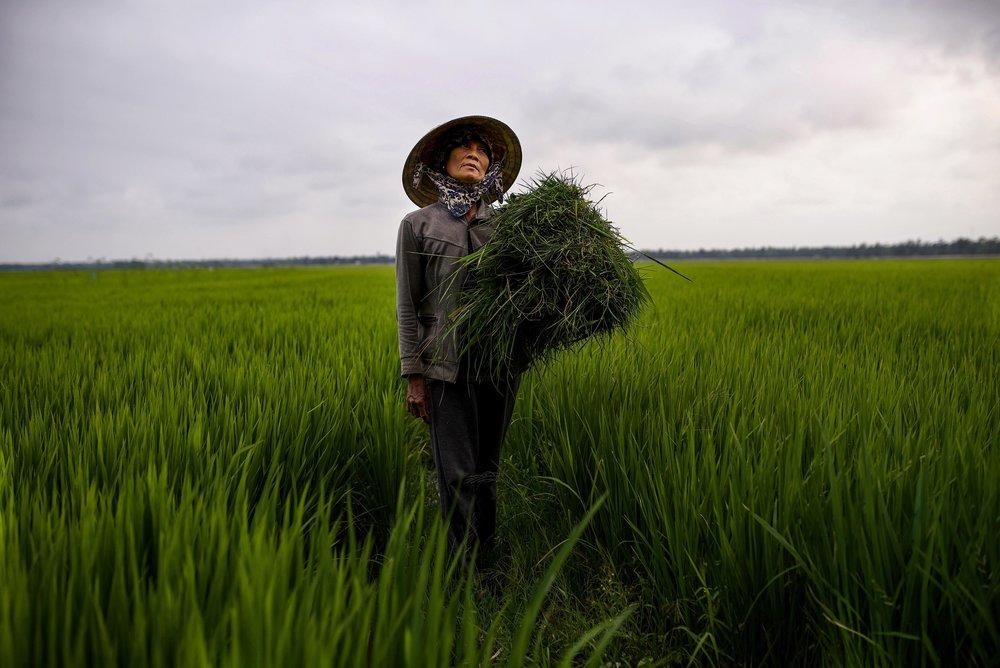 DSC_4725 regal in the rice paddy lisa rayman goldfarb NPG web gallery.jpg