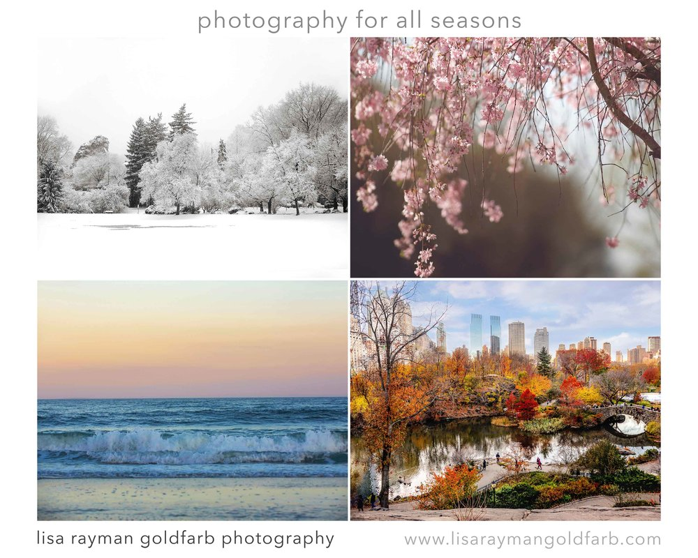 Central Smile Four Seasons montage gallery.jpg
