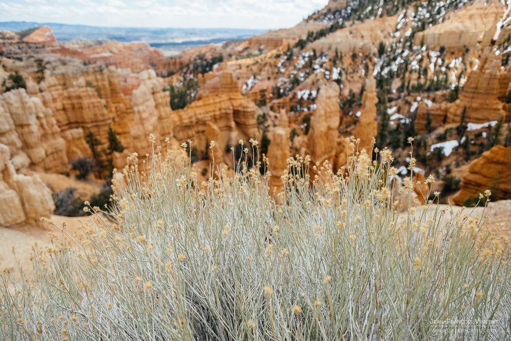 L'ouverture à f2.8 permet de jouer avec les plans, comme ici avec ces fleurs au-dessus des cheminées de pierre de Bryce Canyon