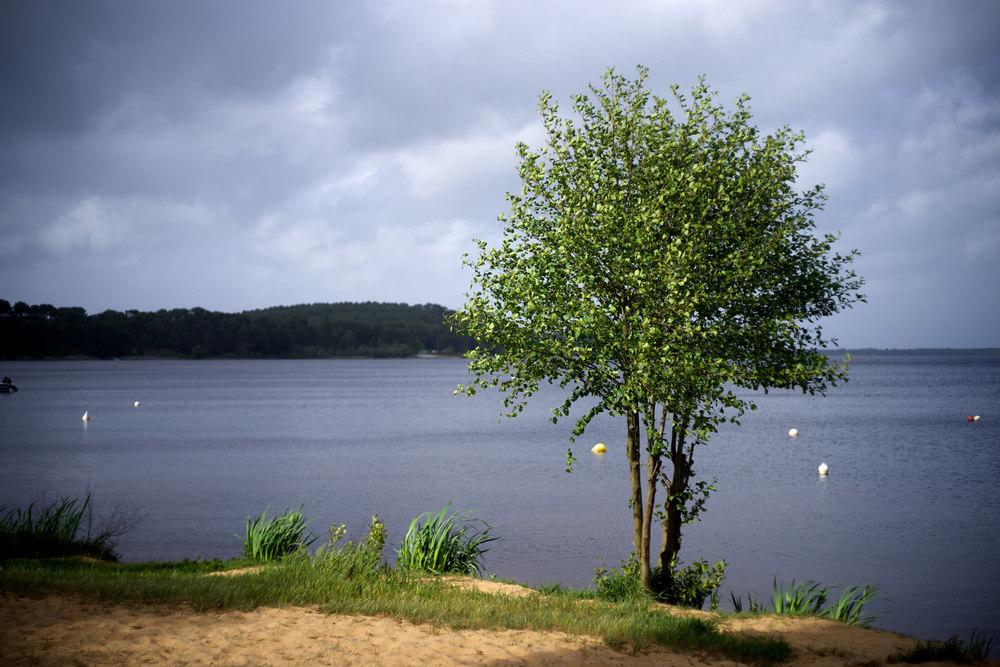 Arbre en lumière à Lacanau. Lac de Lacanau | Lacanau | France Sony A7 | Leica 50 Summicron M Rigid Photos sur le site  500px  ©Thierry Lothon 2014.