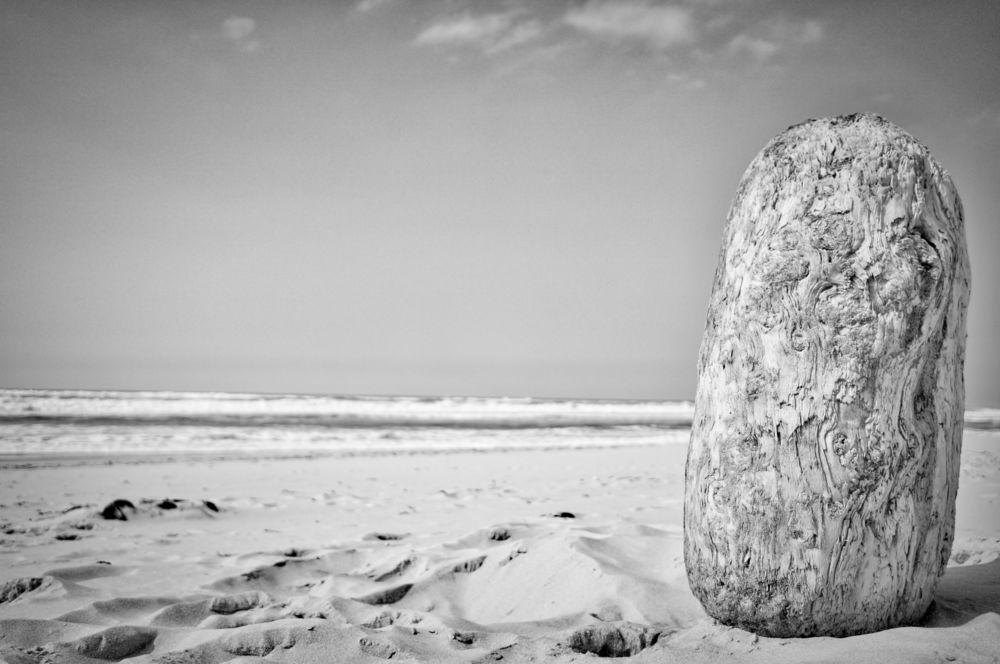 Bois flotté plage du Porde (33) - Sony Nex 6 SEL20F28 - By Éric Courcy