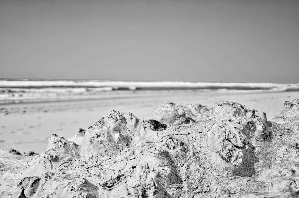 Bois flotté Plage Nord du Porge - Sony Nex 6 Objectif SEL20f28 - modifié avec intensif CK de Macphun