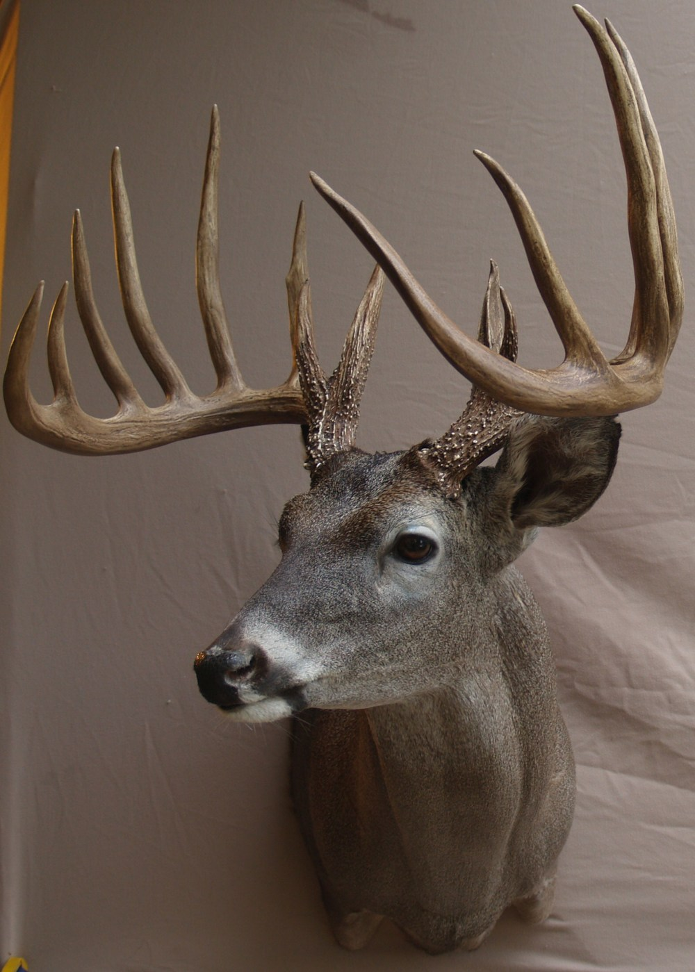 194 point whitetail
