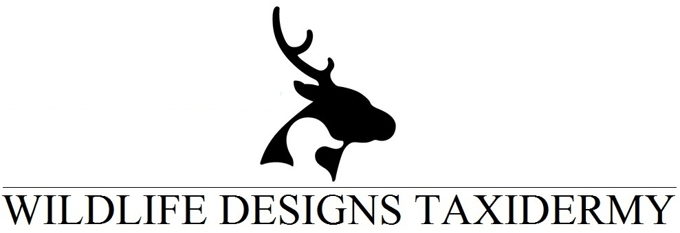 Wildlife Designs Taxidermy, LLC