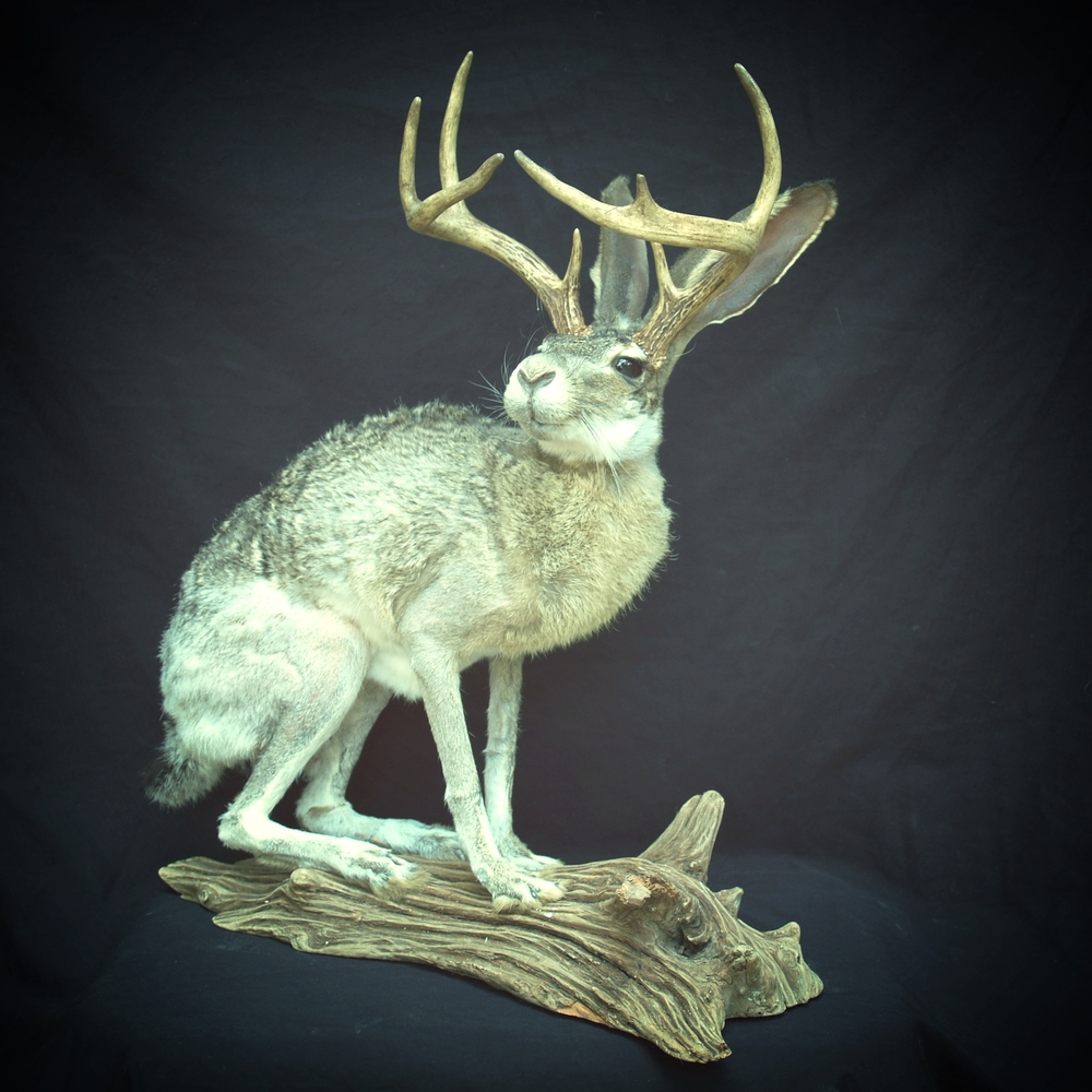 Taxidermy 2015 006.JPG