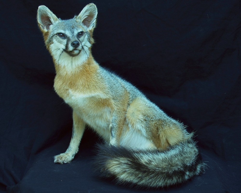 Taxidermy 2015 008.JPG