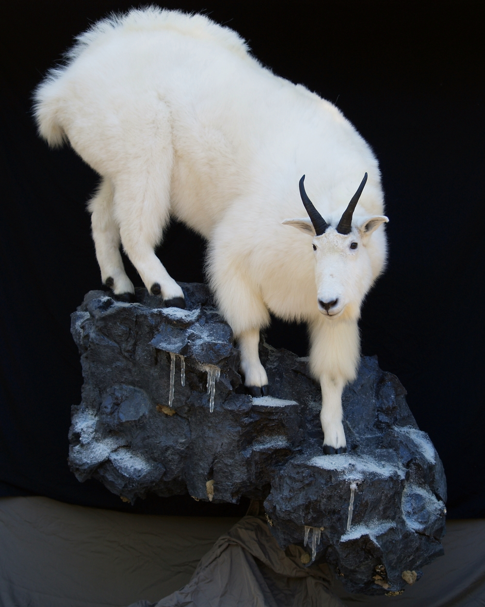 Full Body Life Size Mountain Goat