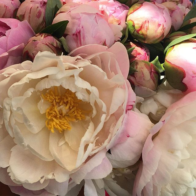 June's best.  #flowers #florist #floraldesign #peonies #weddinginspiration #dsflowers #rsblooms #flowerstagram