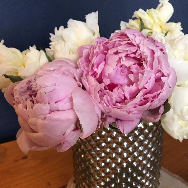 Peonies in July are such a treat!