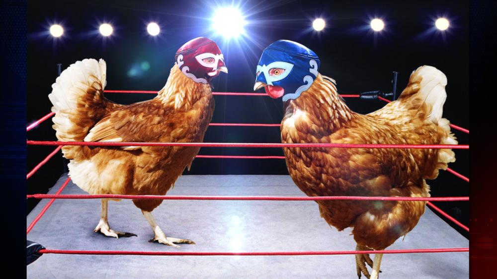 Chicken_Wrestling_FF.png