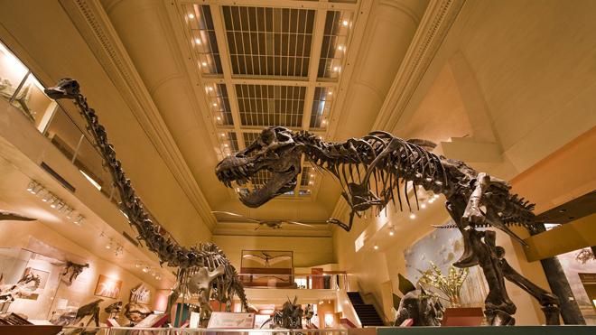 Dinosaur Hall, Natural History Museum.