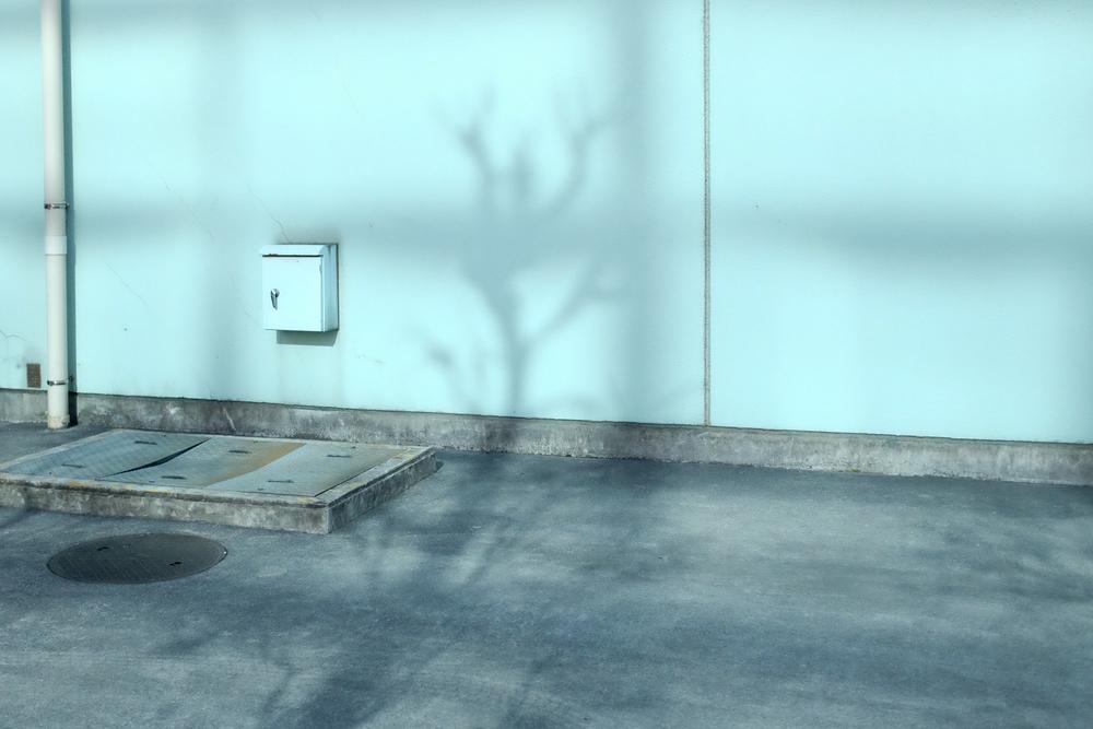 Tokytrees-1013.jpg