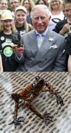 Prince Charles with Frabel Frog2.jpg