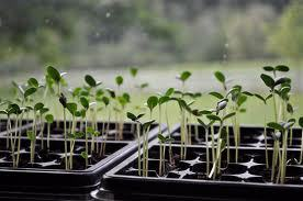 We can HELP YOU GROW... with Seed Starting supplies, nutrient-filled Growing Media and Composting Equipment.