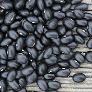 Bulk Seeds Urban Garden Seeds Non GMO and Organic Vegetable