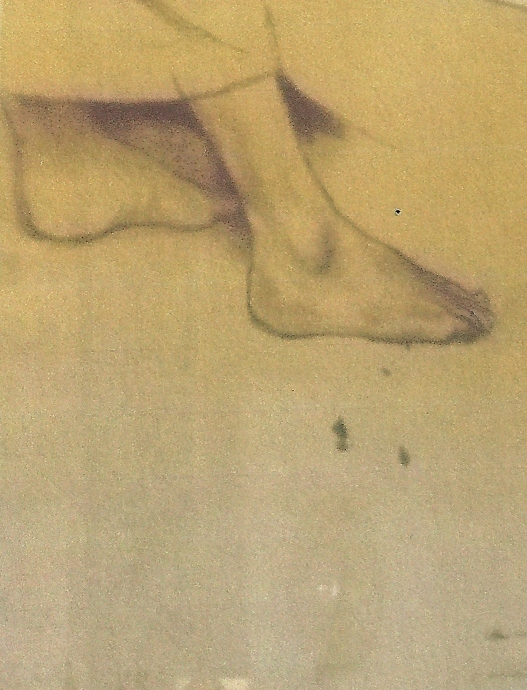 scanBen Long feet cropped.jpg