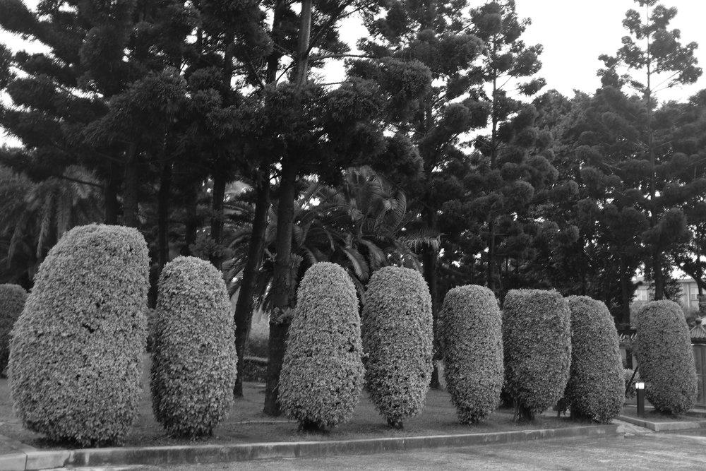TopiaryPostcard.jpg