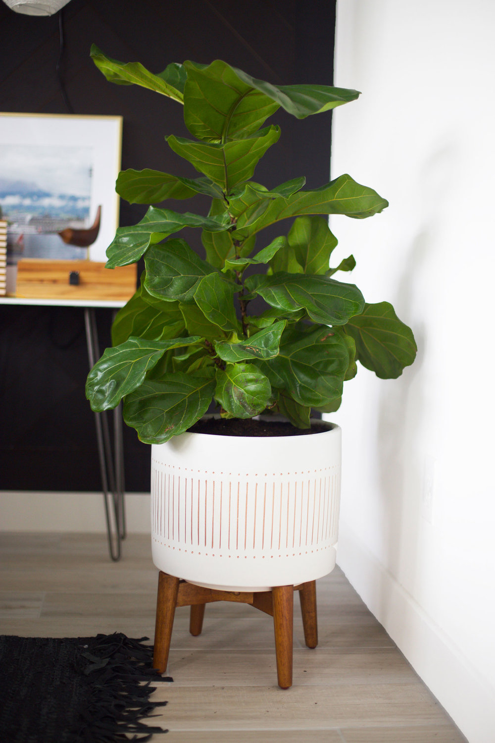 bedroom plant ideas