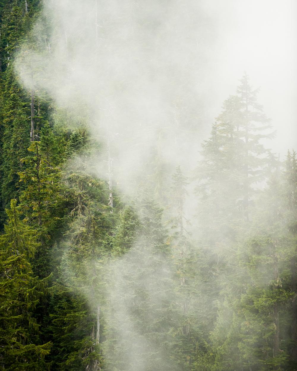 Fog Tenticles