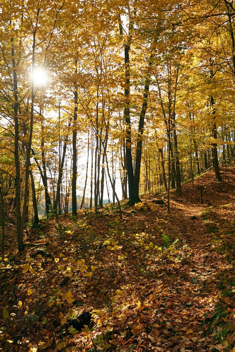 16-10-18_Frontennac_Autumn_DSC2839.jpg